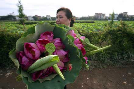 """Bình chọn quốc hoa tại TPHCM """"Vòng cuối"""""""